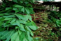 resep sayur daun singkong tanpa santan